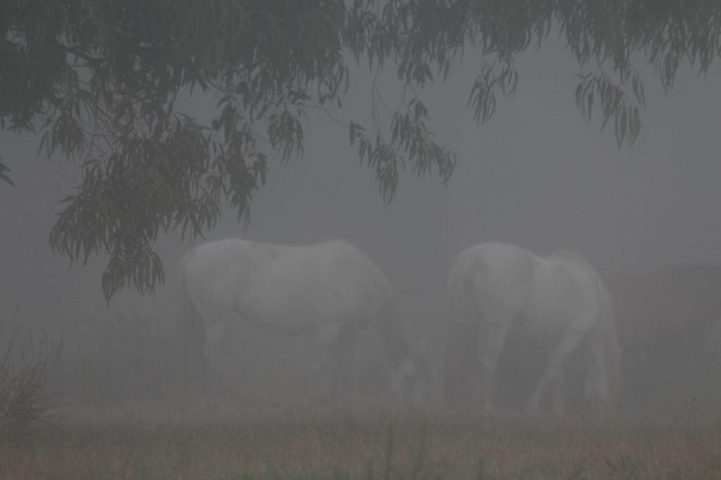 Te dwa konie na łące pojawiły się nagle. Fot. Jerzy S. Majewski