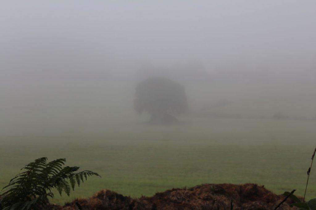 Łąka we mgle. Fot. Jerzy S. Majewski