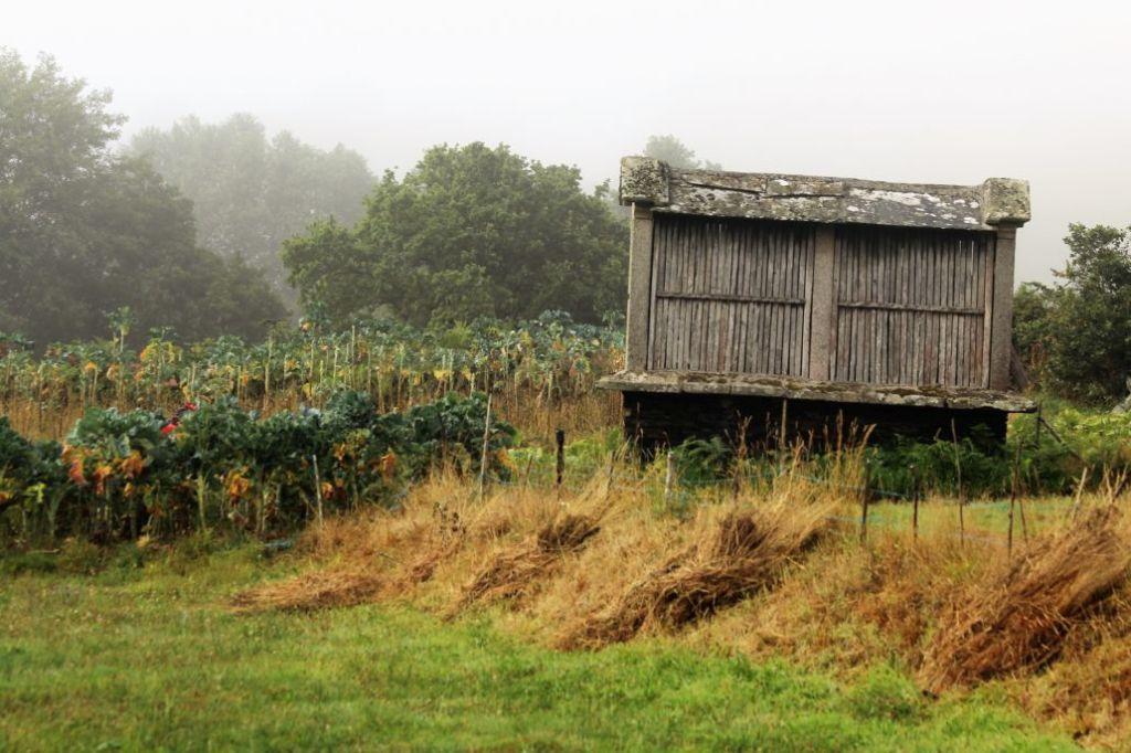 Suszarnia n zboże. Takie suszarnie, często bardzo dekoracyjne można zobaczyć w całej Galicji. Fot. Jerzy S. Majewski