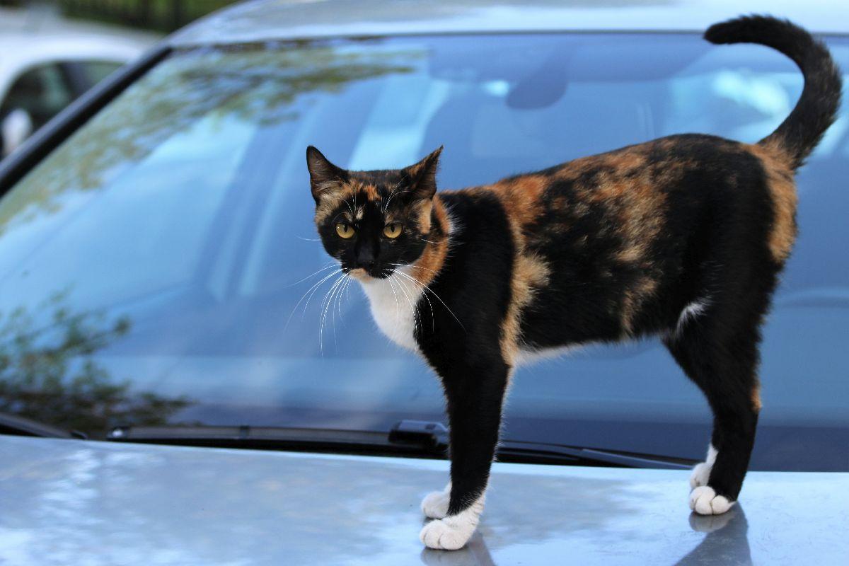 Koty Stambułu