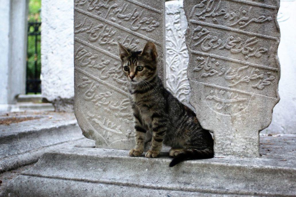 Stambuł. Ten kotek żyjący pomiędzy nagrobkami cmentarza przy Meczecie Książęcym nieopodal Akweduktu Walensa dopiero uczy się jak przeżyć. Fot. Jerzy S. Majewski.