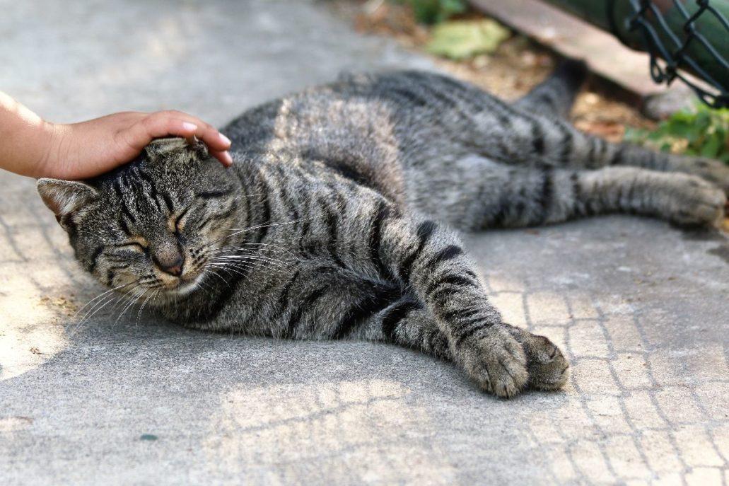 Stambuł. Rozpieszczany kot w parku Yahya Kemal Bayati. Fot. Jerzy S. Majewski