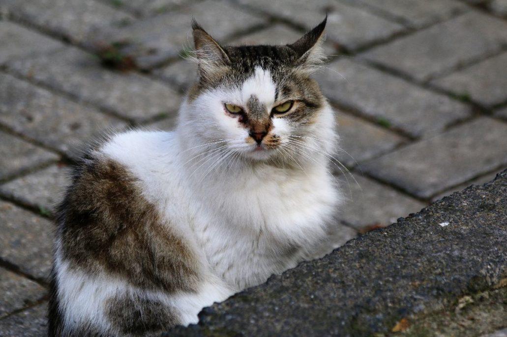 Stambuł. Syty kot w sąsiedztwie targu rybnego w dzielnicy Beşiktaş.. Fot. Jerzy S Majewski
