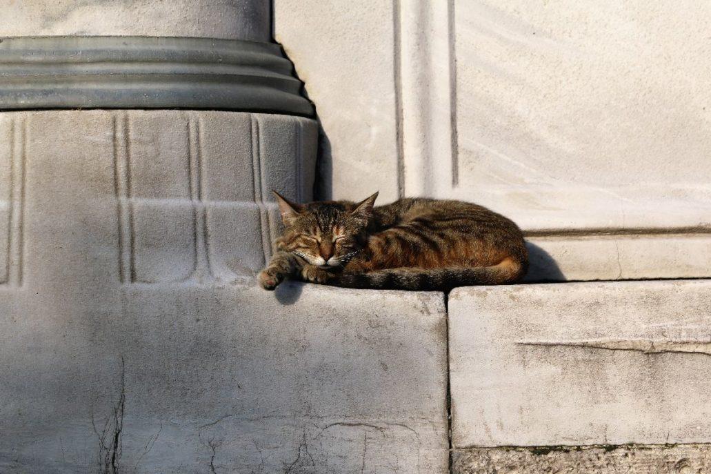 Stambuł. Smaczny sen kota na murze Meczetu Sulejmana Wspaniałego. Fot. Jerzy S. Majewski