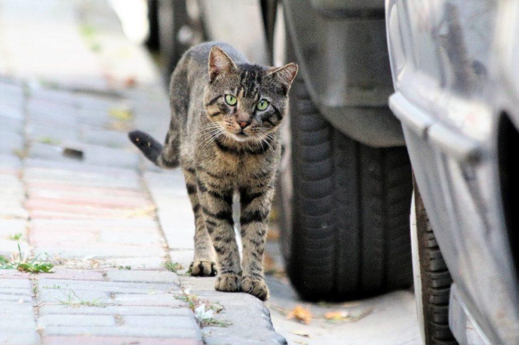 Na chodniku przy ulicy Eren w dzielnicy Beşiktaş. Fot. Jerzy S. Majewski