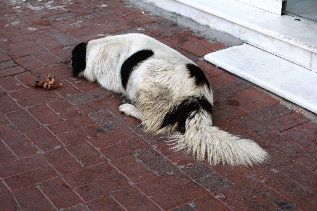 Stambuł. Bezdomny pies śpi obok kości koło baru przy ulicy Eski Yildiz. Fot. Jerzy S. Majewski.