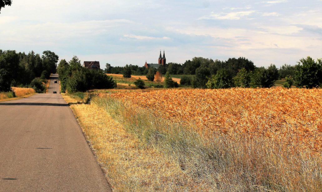 Przybyszew. Kościół widoczny jest z daleka z wielu strony. Tu ze wzgórza na północ od Przybyszewa. Fot. Jerzy S. Majewski