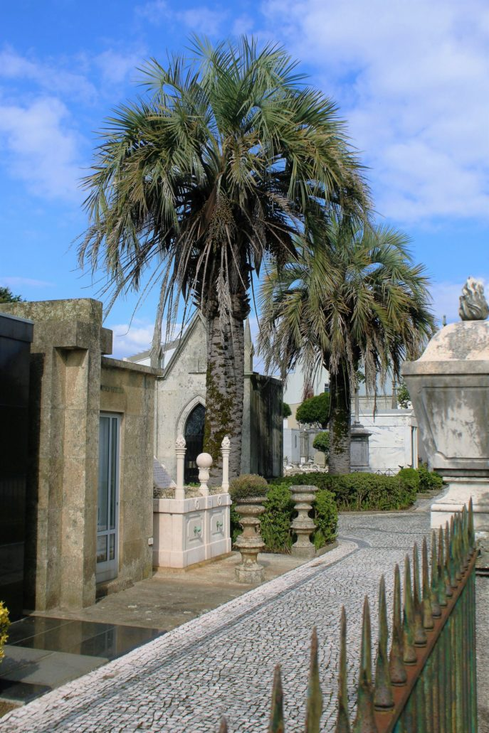 Porto. Cemitério de Agramonte. W wielu miejscach cmentarza rosną dorodne palmy. Fot. Jerzy S. Majewski