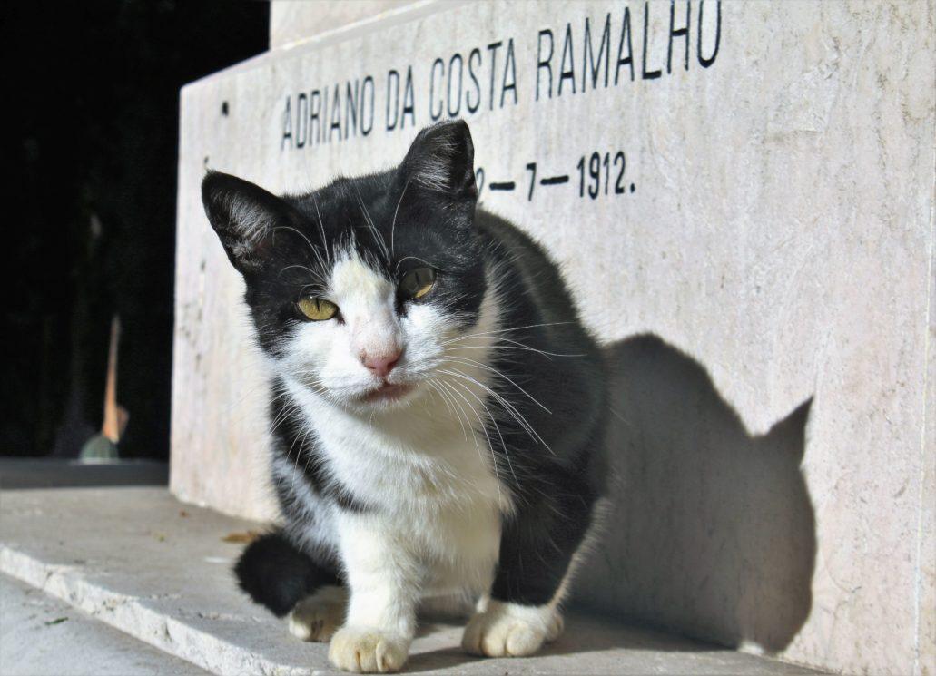 Porto. Cemitério de Agramonte. Kotek na grobowcu. Fot. Jerzy S. Majewski